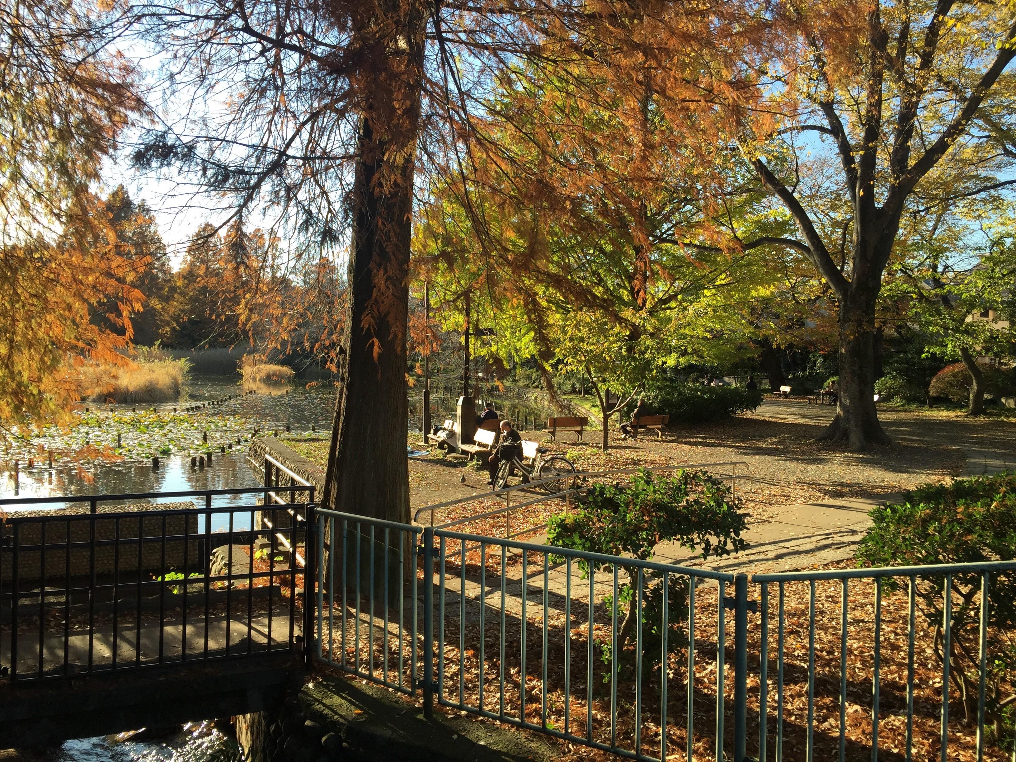 【吉祥寺】都内のプール付き大豪邸をまるまる貸切できる!「Park side villa東京」