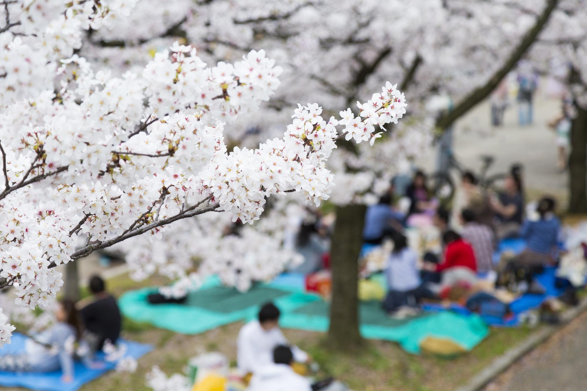 【いつもと違う花見をしよう!】桜の見えるレンタルスペースを紹介します!