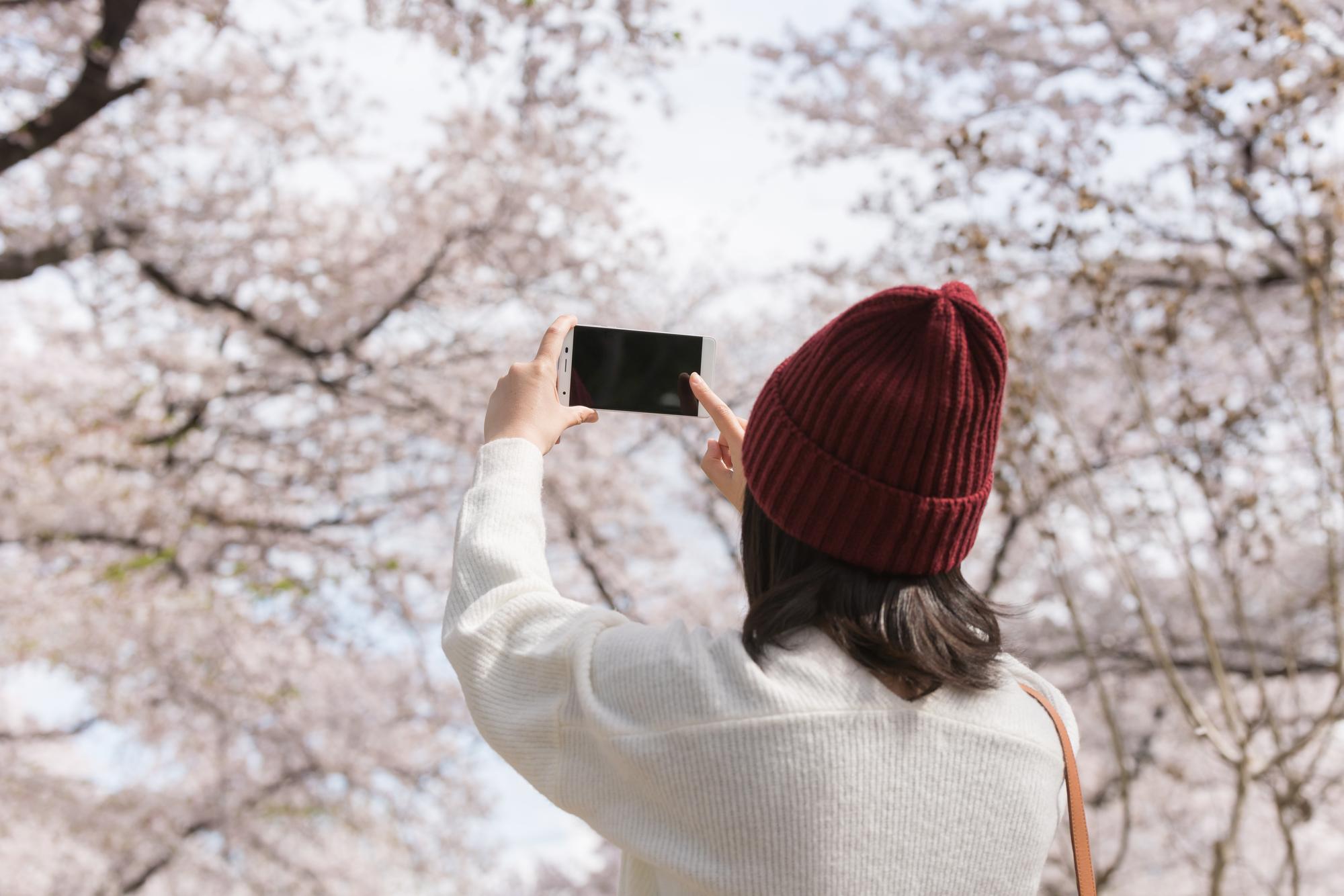 桜を一人占め!?東京でおススメの穴場お花見スポット6選!