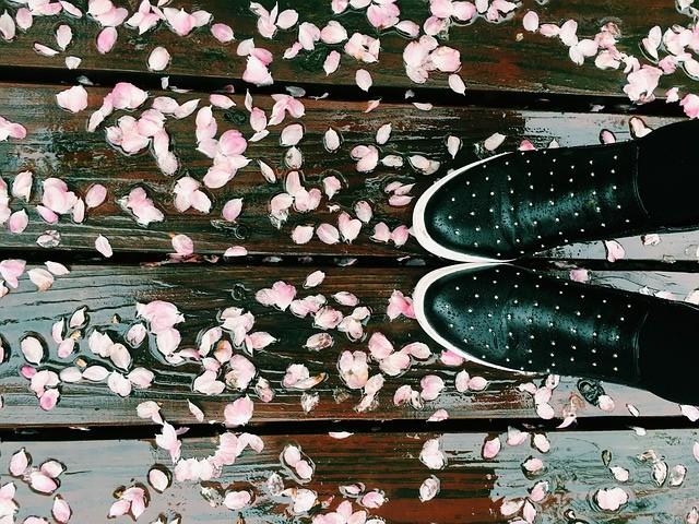 お花見が雨予報でも大丈夫!事前の雨対策でお花見を楽しむ方法
