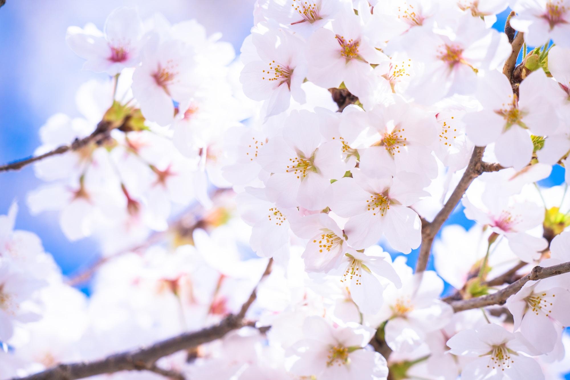 【2019年版】東京のお花見スポット