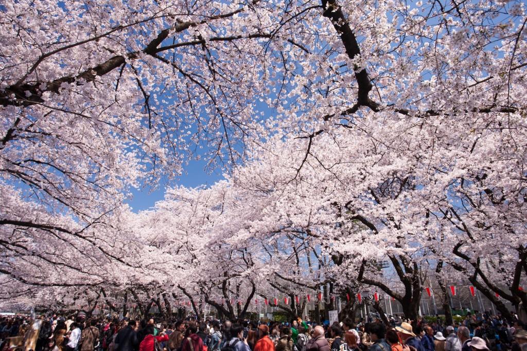 上野恩賜公園(上野公園)の桜